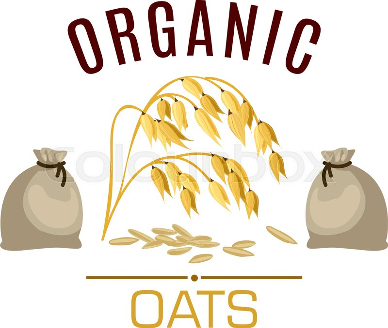 800x678 Oat Vector Icon Or Poster. Cereal Seed Grass Plant Of Oats Ear