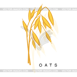 300x300 Oats Ear, Infographic With Realistic Cereal Crop