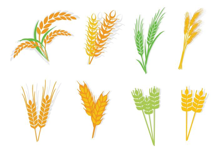 700x490 Different Type Oats Vector