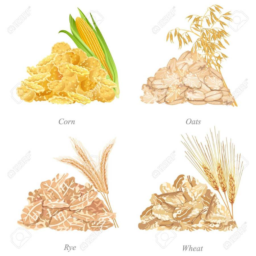 900x900 Download Oats Flakes In Vector Clipart Rye Oat Wheat