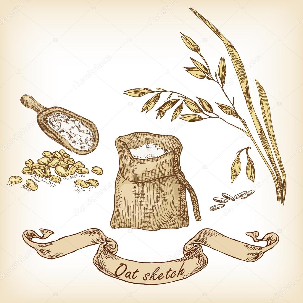 1024x1024 Drawn Oat Vector