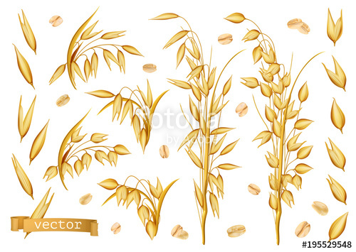 500x355 Oat Plants, Rolled Oats. 3d Realistic Vector Icon Set Stock Image