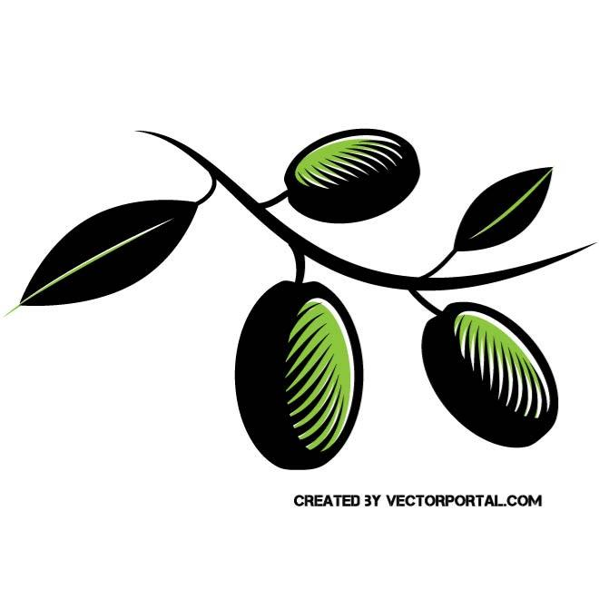 660x660 Olive Branch