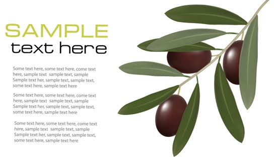 550x312 Olive Branch Vector Cards