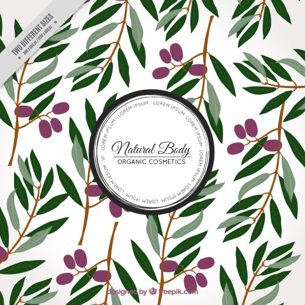 626x626 Olive Branch Vectors, Photos And Psd Files Free Download