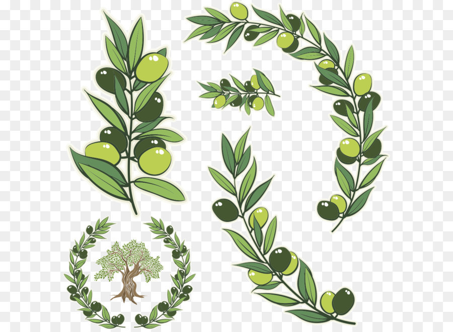 900x660 Olive Branch Olive Wreath Stock Photography Illustration