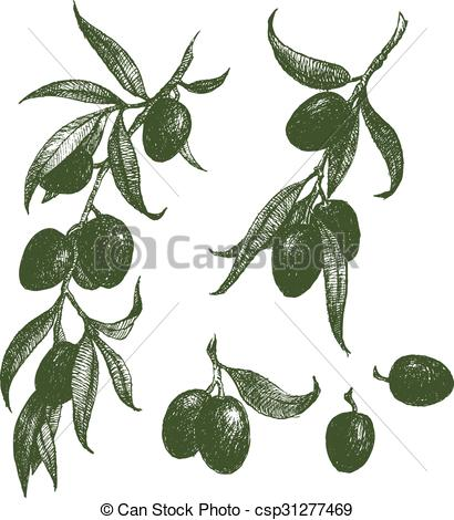 410x470 Olive Branch Vector. Beautiful Vector Image With Nice Hand Drawn