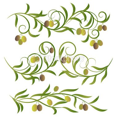 380x380 Olive Branches,vector Illustration . Olive Vector