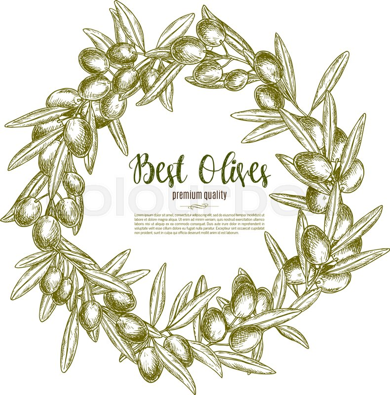 790x800 Green Olive Branches Wreath Vector Poster For Olive Oil Product Or