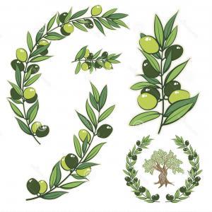 300x300 Stock Illustration Vector Wreath Olive Branch Olive Tree Frame