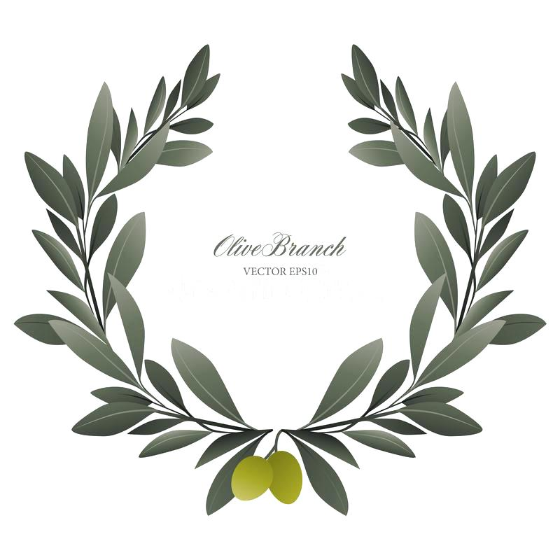 800x800 Vector Wreath With Olive Branch Png Greyside