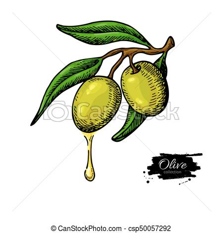 450x470 Olive Branch With A Drop Of Olive Oil Vector Illustration. Hand