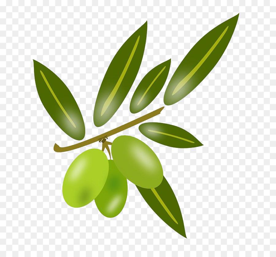 900x840 Olive Leaf Olive Oil Cooking Oil
