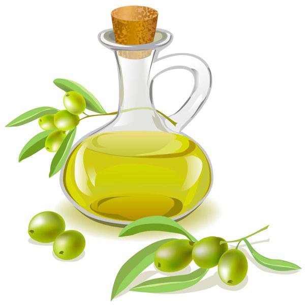 600x600 Olive Oil Bottle Vector Free Download