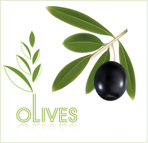 600x581 Olive Oil Vector Labels