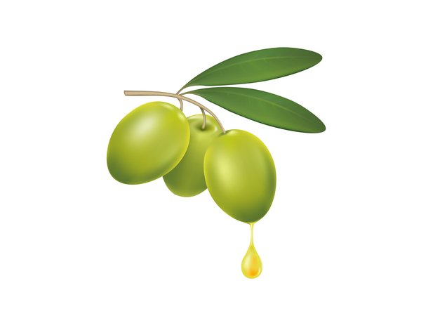 600x460 Olive Branch With A Drop Of Olive Oil Vector Free Download