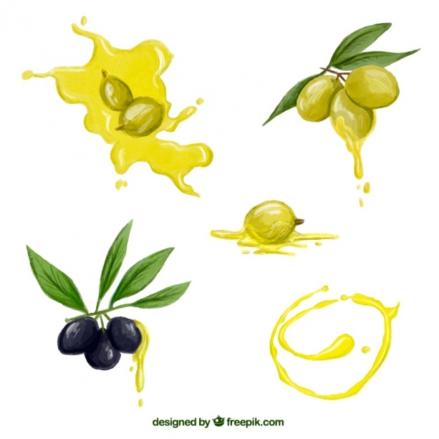 626x626 Olive Oil Vectors, Photos And Psd Files Free Download