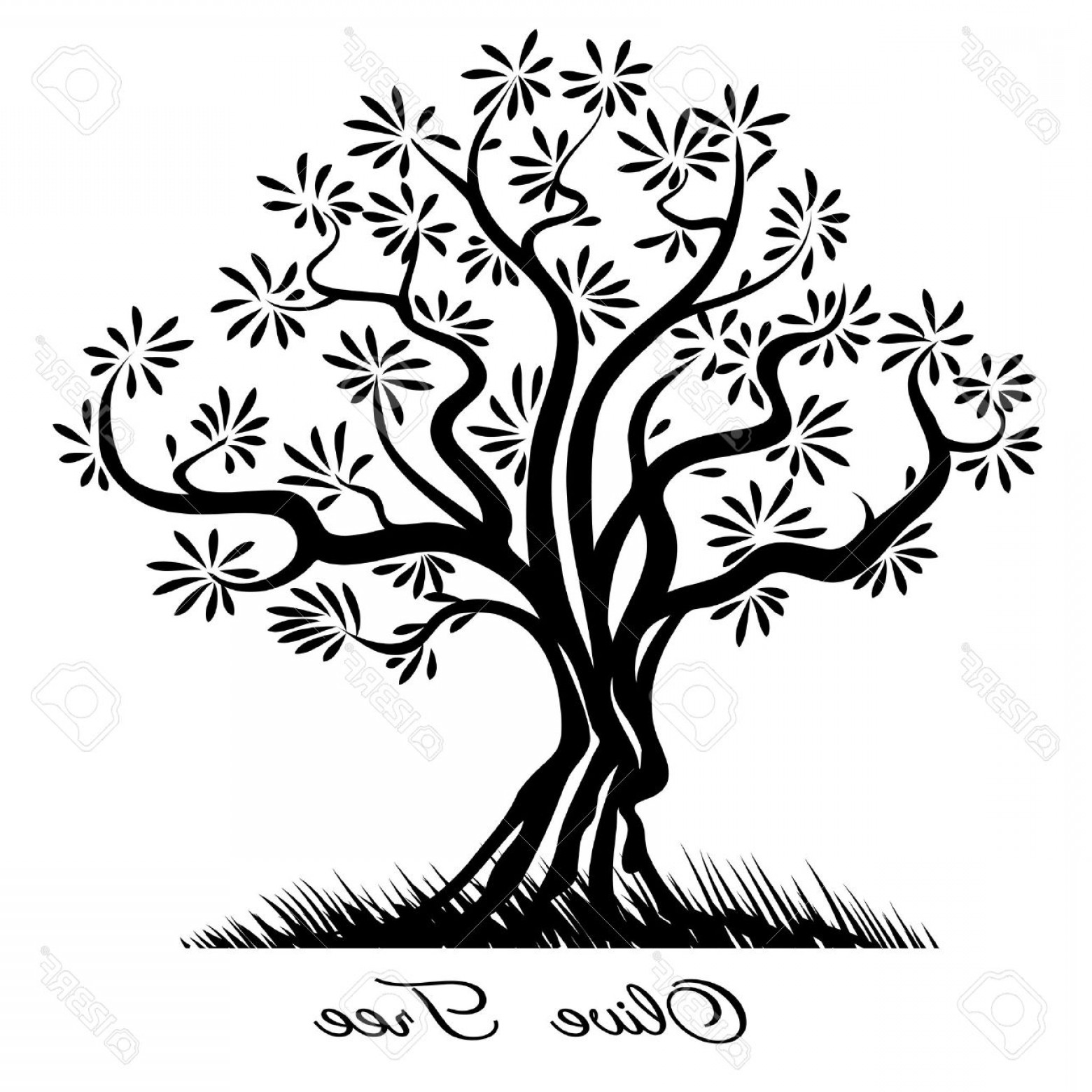 1560x1560 Olive Tree Vector Arenawp