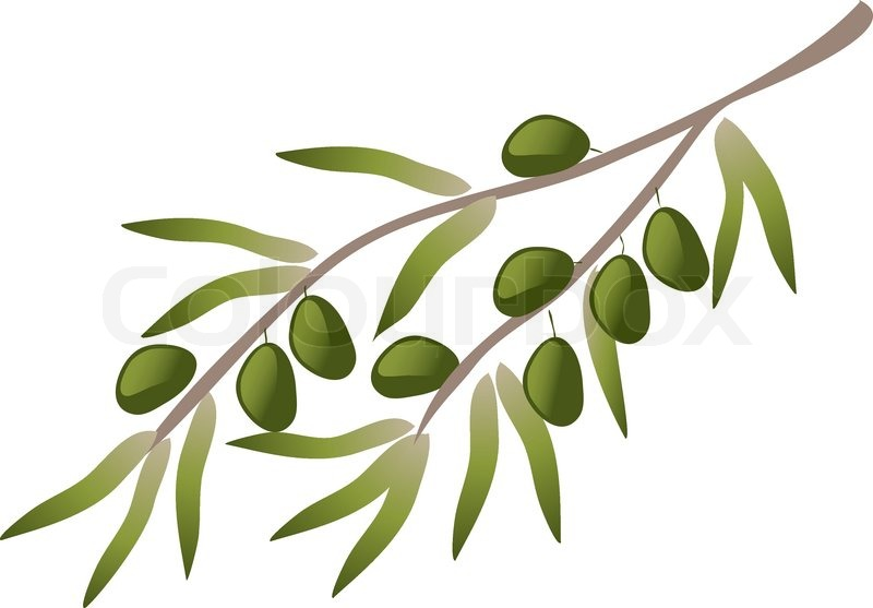 800x557 A Branch Of Olive Tree. Stock Vector Colourbox