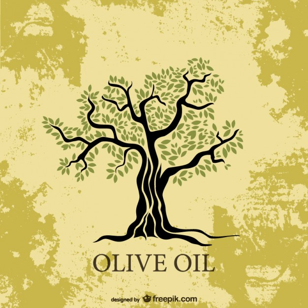 626x626 Olive Tree Vector Free Download