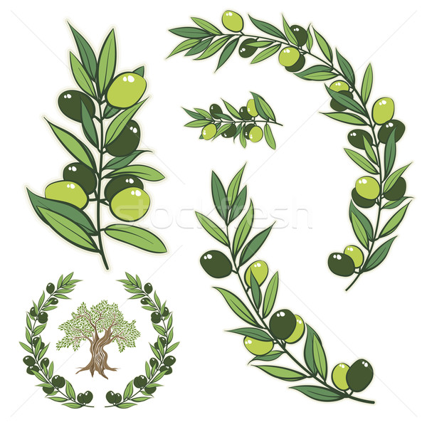 600x600 Olive Tree Vector Stock Vectors, Illustrations And Cliparts