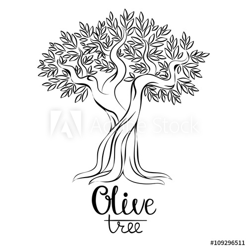 500x500 Olive Tree Vector Illustration. Olive Oil. Vector Olive Tree For