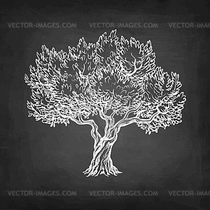 300x300 Chalk Sketch Of Olive Tree