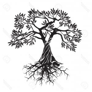 300x300 Photostock Vector Black Olive Tree Vector Illustration Arenawp