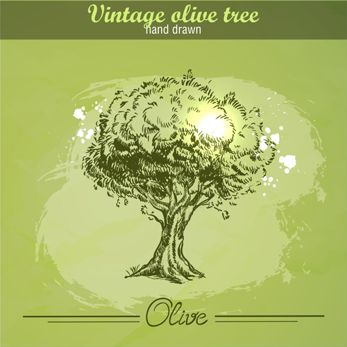 500x500 Vintage Olive Tree Hand Drawn Vector 01 Free Download