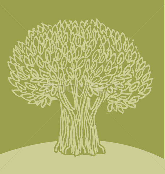 571x600 Olive Tree Vector Illustration G P (Galyna) ( 1631081) Stockfresh
