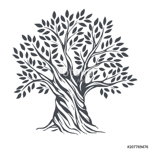 500x500 Hand Drawn Olive Tree. Vector Sketch Illustration Stock Image And