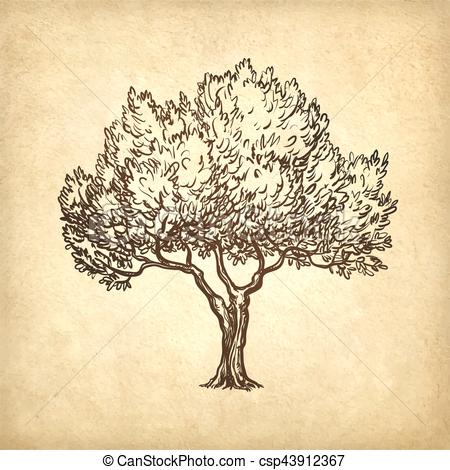 450x470 Hand Drawn Vector Illustration Of Olive Tree On Old Paper... Clip