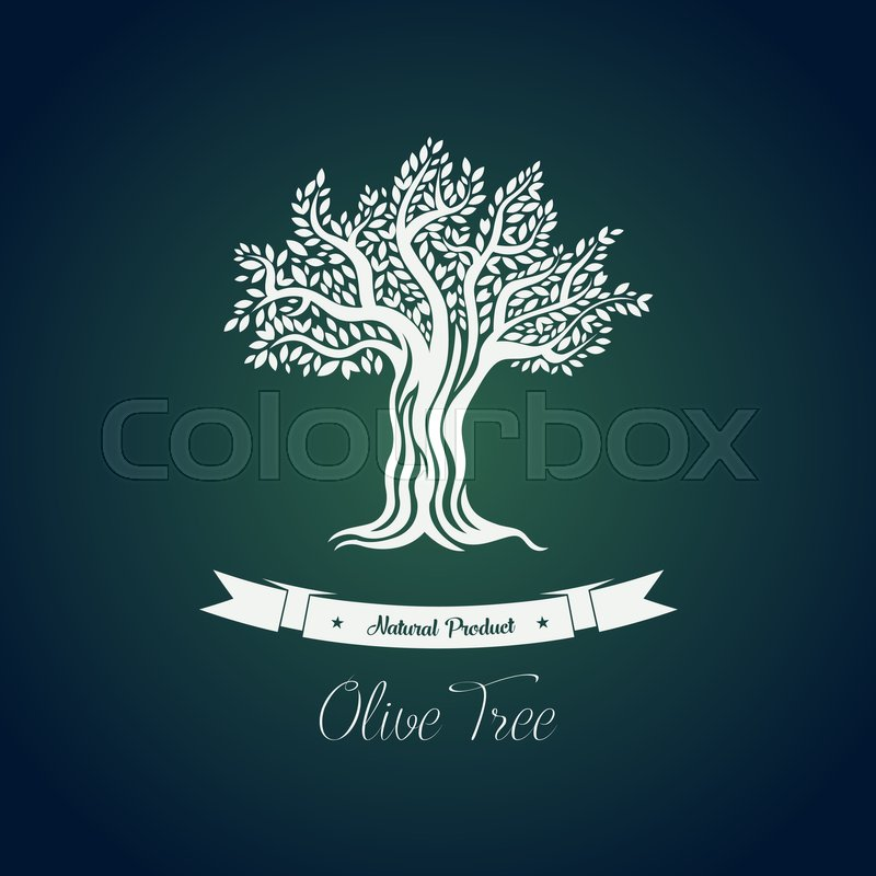 800x800 Leaf On Branches Of Olive Oil Tree Vector Drawing. Greece Olive