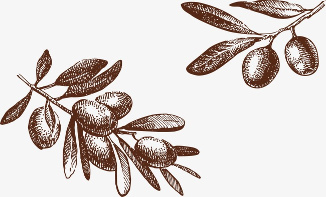 650x394 Olive Tree, Tree Vector, Hand Painted Olive, Hand Drawn Elements