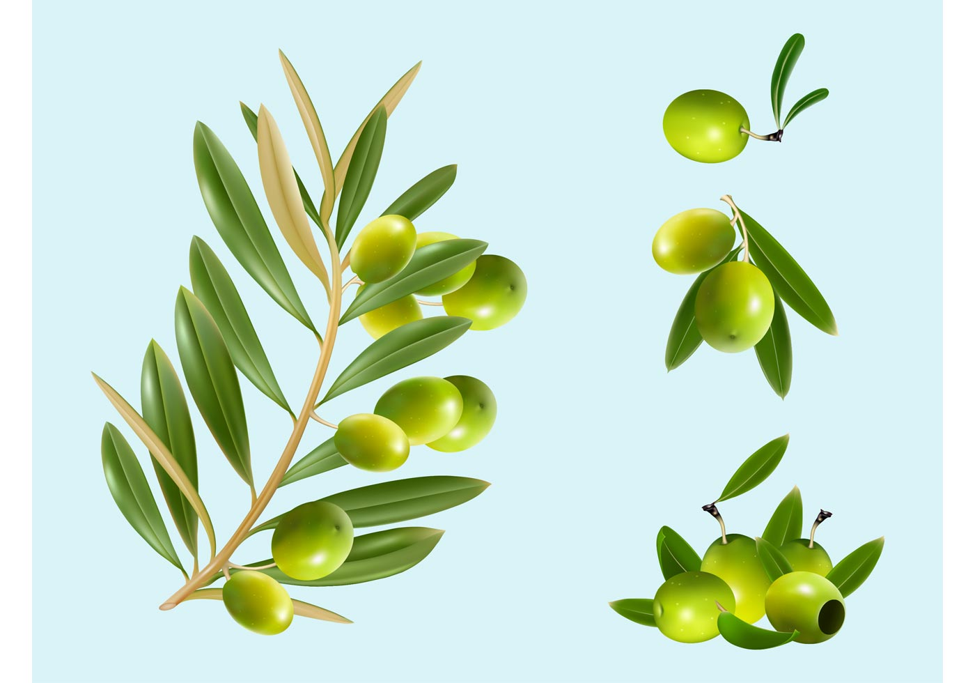 1400x980 Olive Free Vector Art
