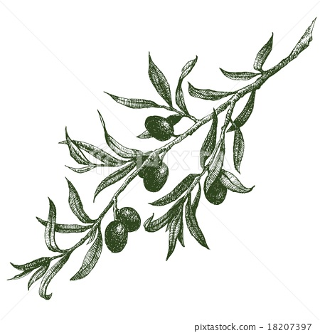 450x468 Olive Branch Vector