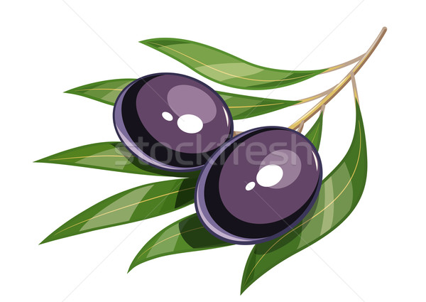600x425 Olive Tree Vector Stock Vectors, Illustrations And Cliparts