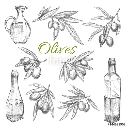 500x500 Olives Vector Sketch Icons Of Olive Oil Product Stock Image And