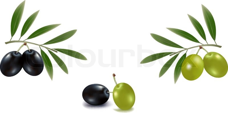 800x397 Photo Realistic Vector Illustration. Green And Black Olives With