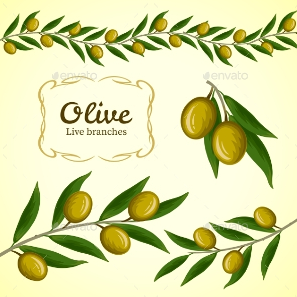 590x590 Vector Collection Of Olive Branch, Green Olives By Oasis15