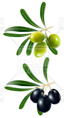 219x400 Green And Black Olive Vector Image Vector Artwork Of Plants And
