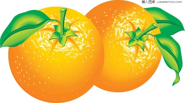 600x335 Orange Fruits Vector Material Graphics Collection My Free