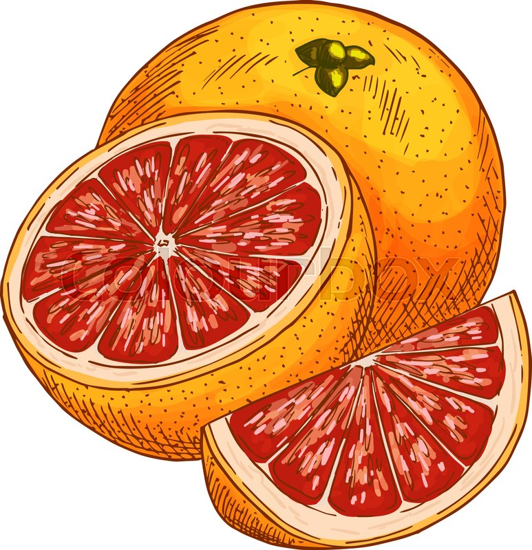 773x800 Red Orange Fruit Sketch. Vector Isolated Icon Of Fresh Whole And