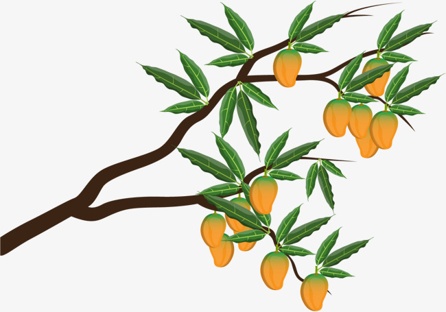 650x455 Orange Bending, Orange Vector, Tangerine, Orange Trees Png And