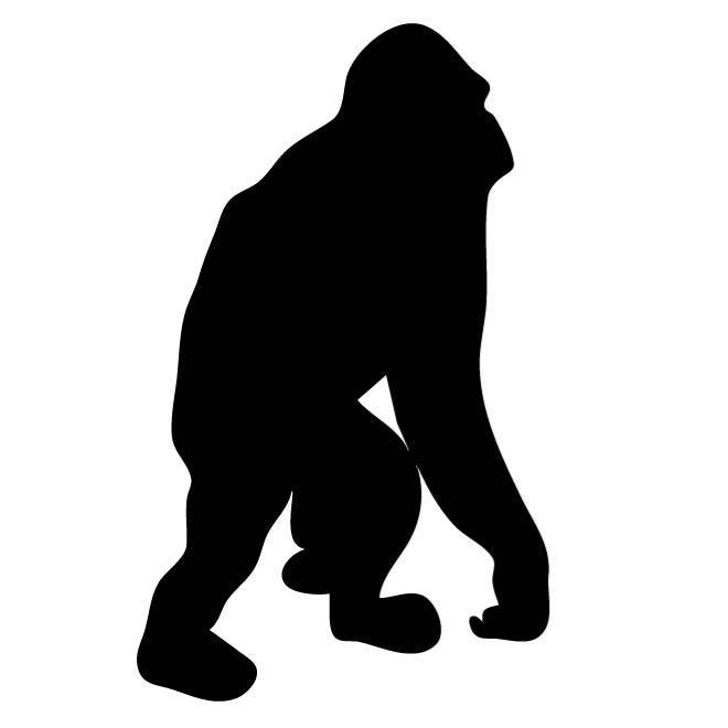 660x660 Free Orangutan Vectors 3 Downloads Found