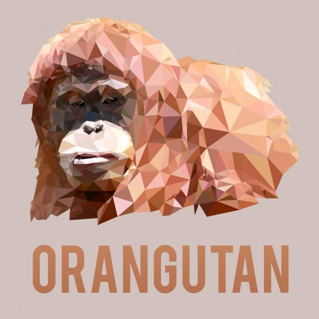 626x626 Low Poly Orangutan Vector Premium Download