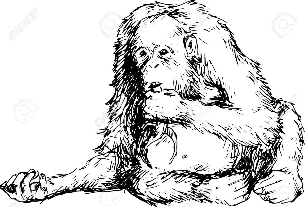 1300x880 Orangutan Clipart Vector 22