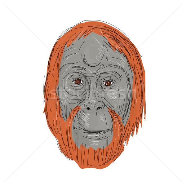 600x600 Orangutan Stock Vectors, Illustrations And Cliparts Stockfresh