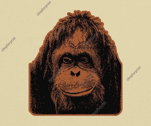 600x500 Orangutan Vector Image