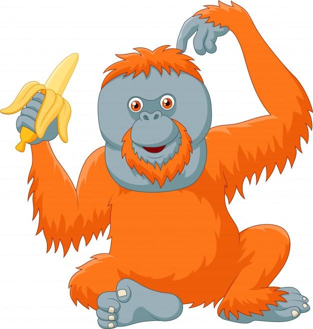 626x658 Orangutan Vectors, Photos And Psd Files Free Download